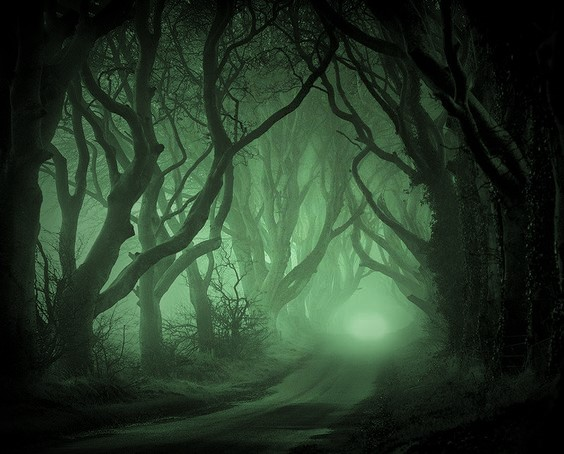 woods used b4 (2).jpg
